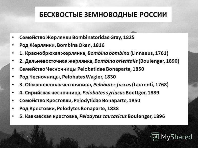 БЕСХВОСТЫЕ ЗЕМНОВОДНЫЕ РОССИИ Семейство Жерлянки Bombinatoridae Gray, 1825 Род Жерлянки, Bombina Oken, 1816 1. Краснобрюхая жерлянка, Bombina bombina (Linnaeus, 1761) 2. Дальневосточная жерлянка, Bombina orientalis (Boulenger, 1890) Семейство Чесночн