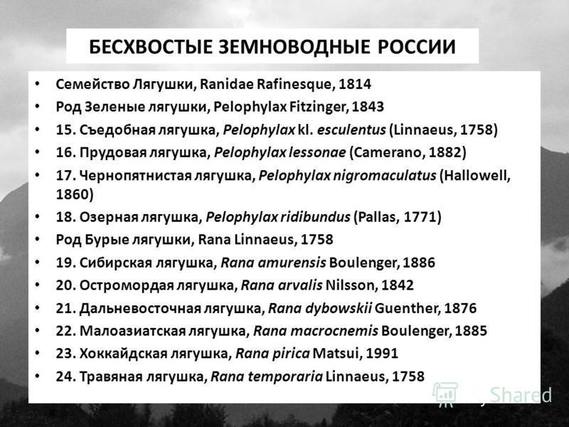 БЕСХВОСТЫЕ ЗЕМНОВОДНЫЕ РОССИИ Семейство Лягушки, Ranidae Rafinesque, 1814 Род Зеленые лягушки, Pelophylax Fitzinger, 1843 15. Съедобная лягушка, Pelophylax kl. esculentus (Linnaeus, 1758) 16. Прудовая лягушка, Pelophylax lessonae (Camerano, 1882) 17.