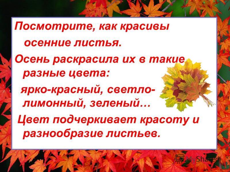 Посмотрите, как красивы осенние листья. Осень раскрасила их в такие разные цвета: ярко-красный, светло- лимонный, зеленый… Цвет подчеркивает красоту и разнообразие листьев.