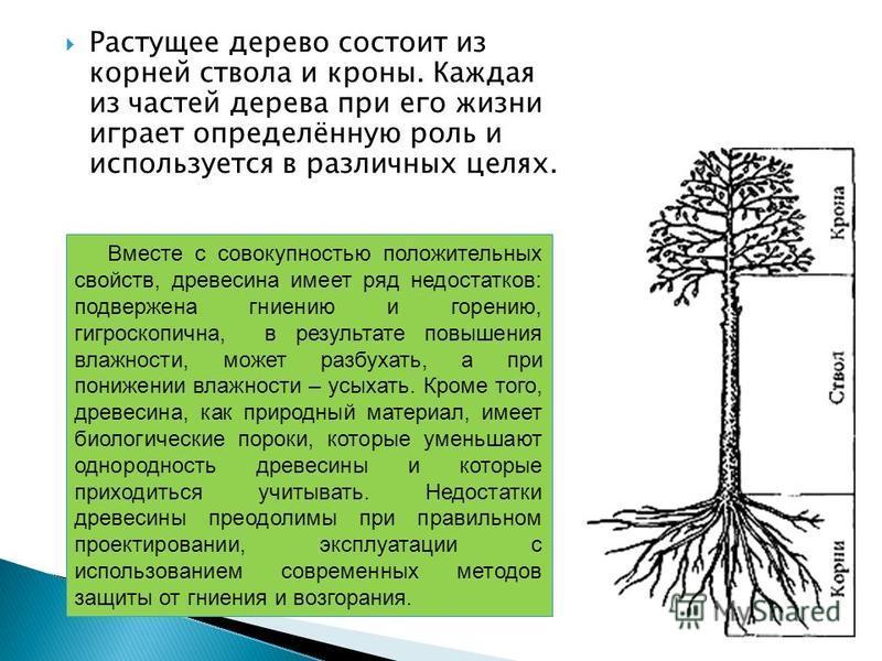 Растущее дерево состоит из корней ствола и кроны. Каждая из частей дерева при его жизни играет определённую роль и используется в различных целях. Вместе с совокупностью положительных свойств, древесина имеет ряд недостатков: подвержена гниению и гор