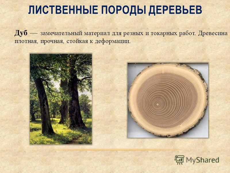 ЛИСТВЕННЫЕ ПОРОДЫ ДЕРЕВЬЕВ Дуб замечательный материал для резных и токарных работ. Древесина плотная, прочная, стойкая к деформации.