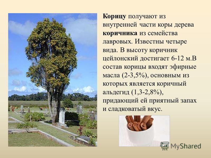 Корицу получают из внутренней части коры дерева коричника из семейства лавровых. Известны четыре вида. В высоту коричник цейлонский достигает 6-12 м.В состав корицы входят эфирные масла (2-3,5%), основным из которых является коричный альдегид (1,3-2,