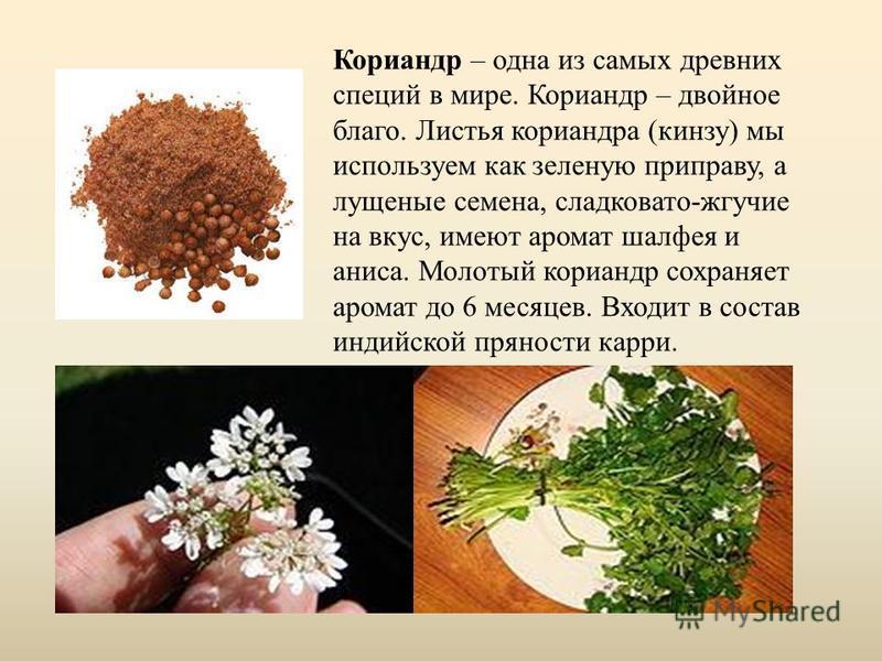 Кориандр – одна из самых древних специй в мире. Кориандр – двойное благо. Листья кориандра (кинзу) мы используем как зеленую приправу, а лущеные семена, сладковато-жгучие на вкус, имеют аромат шалфея и аниса. Молотый кориандр сохраняет аромат до 6 ме