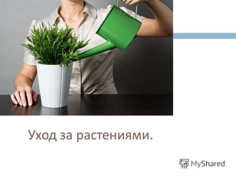 Уход за растениями.