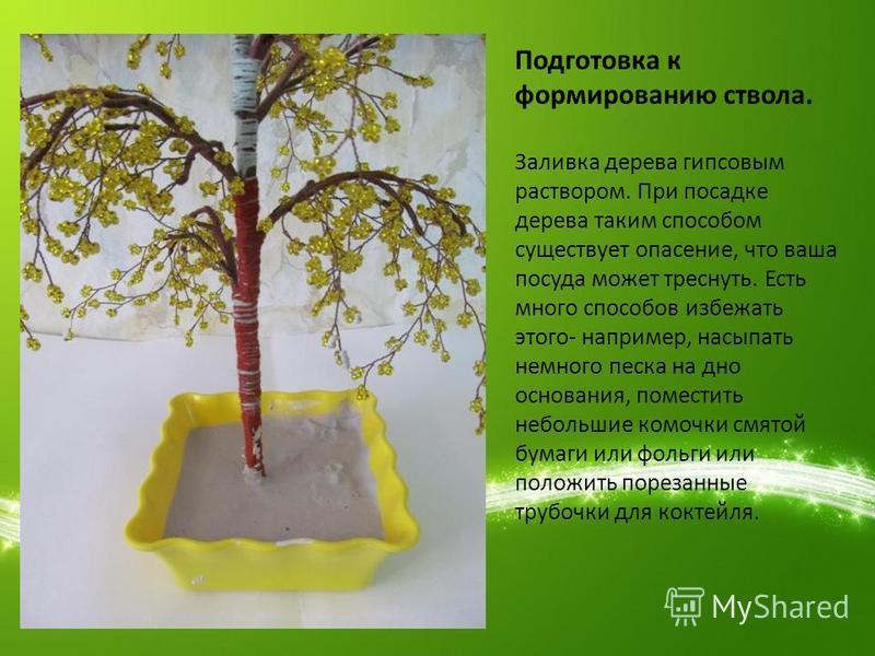 Подготовка к формированию ствола. Заливка дерева гипсовым раствором. При посадке дерева таким способом существует опасение, что ваша посуда может треснуть. Есть много способов избежать этого- например, насыпать немного песка на дно основания, помести