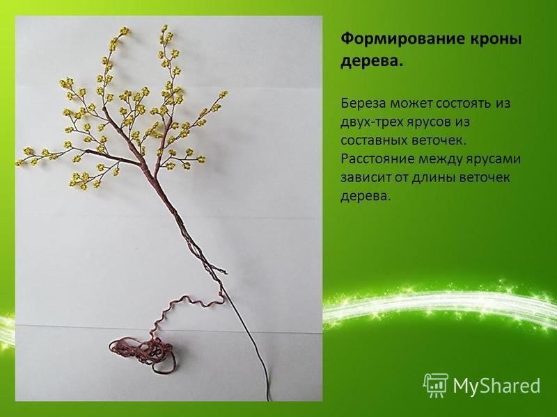 Формирование кроны дерева. Береза может состоять из двух-трех ярусов из составных веточек. Расстояние между ярусами зависит от длины веточек дерева.