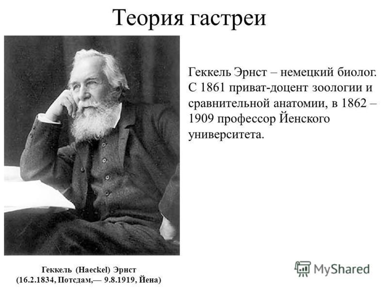Теория гастреи Геккель (Haeckel) Эрнст (16.2.1834, Потсдам, 9.8.1919, Йена) Геккель Эрнст – немецкий биолог. С 1861 приват-доцент зоологии и сравнительной анатомии, в 1862 – 1909 профессор Йенского университета.