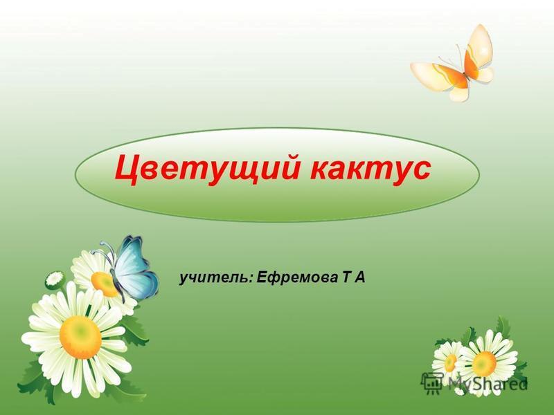 Цветущий кактус учитель: Ефремова Т А