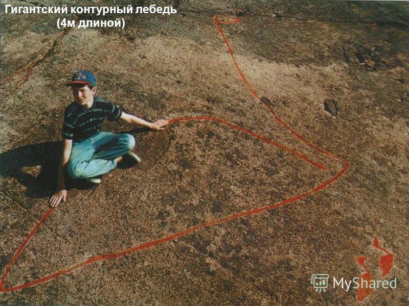 Знаменитая на весь мир триада: выдра, Бес, налим. Скала с солнечно-лунной символикой. Пери Нос. Гигантский контурный лебедь (4 м длиной)