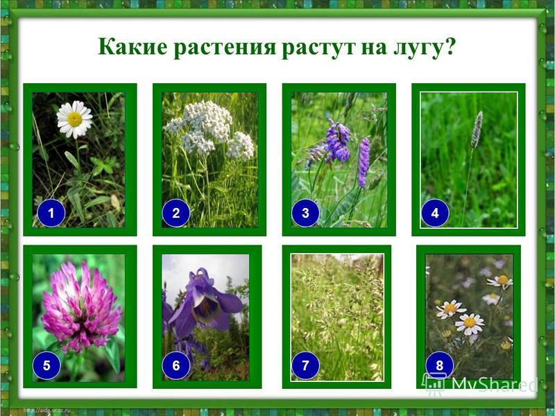Какие растения растут на лугу? 76 2 5 34 8 1