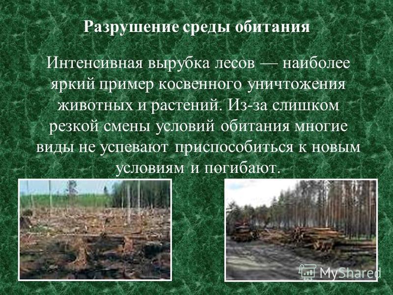 Разрушение среды обитания Интенсивная вырубка лесов наиболее яркий пример косвенного уничтожения животных и растений. Из-за слишком резкой смены условий обитания многие виды не успевают приспособиться к новым условиям и погибают.