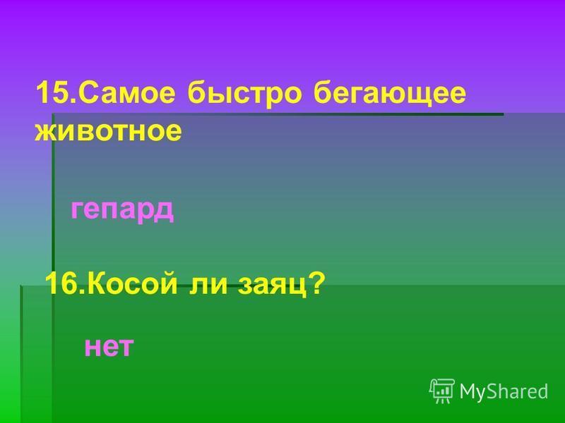 15. Самое быстро бегающее животное гепард 16. Косой ли заяц? нет
