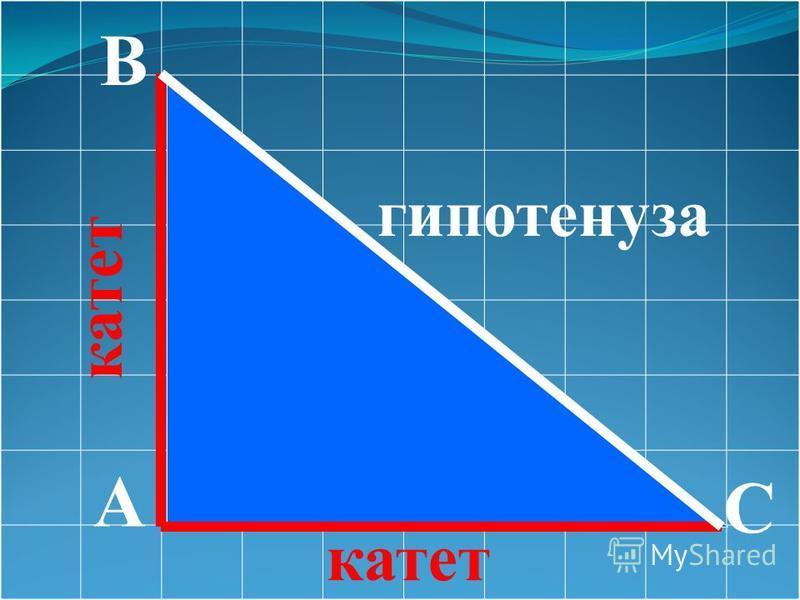 A B C гипотенуза катет