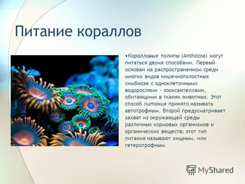 Питание кораллов Коралловые полипы (Anthozoa) могут питаться двумя способами. Первый основан на распространенном среди многих видов кишечнополостных симбиозе с одноклеточными водорослями - зооксантеллами, обитающими в тканях животных. Этот способ пит