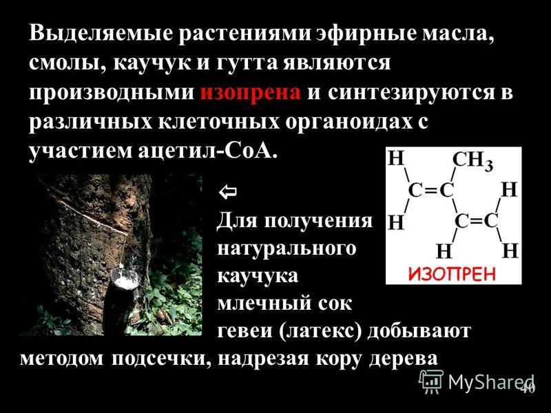 Выделяемые растениями эфирные масла, смолы, каучук и гутта являются производными изопрена и синтезируются в различных клеточных органоидах с участием ацетил-СоА. Для получения натурального каучука млечный сок методом подсечки, надрезая кору дерева ге