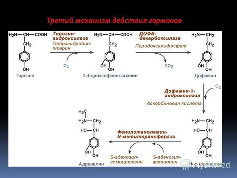 Третий механизм действия гормонов