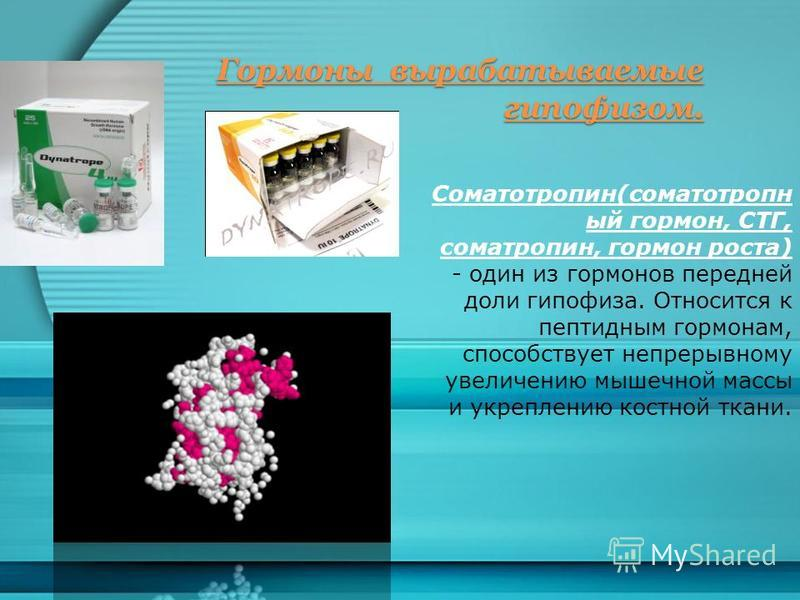 Гормоны вырабатываемые гипофизом. Соматотропин(соматотропн ый гормон, СТГ, соматропин, гормон роста) - один из гормонов передней доли гипофиза. Относится к пептидным гормонам, способствует непрерывному увеличению мышечной массы и укреплению костной т