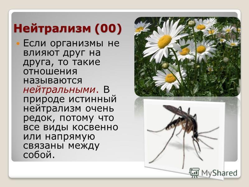 Нейтрализм (00) Если организмы не влияют друг на друга, то такие отношения называются нейтральными. В природе истинный нейтрализм очень редок, потому что все виды косвенно или напрямую связаны между собой.