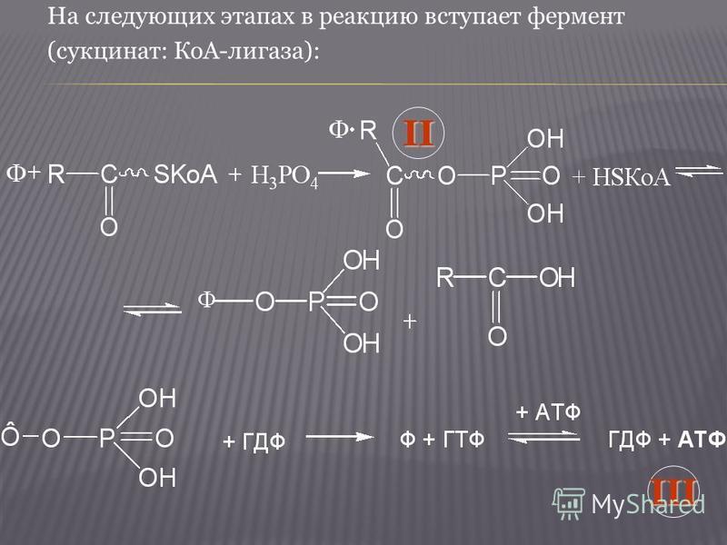На следующих этапах в реакцию вступает фермент (сукцинат: КоА-лигаза):II III