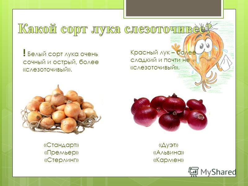 Красный лук – более сладкий и почти не «слезоточивый». ! Белый сорт лука очень сочный и острый, более «слезоточивый». «Стандарт» «Премьер» «Стерлинг» «Дуэт» «Альвина» «Кармен»