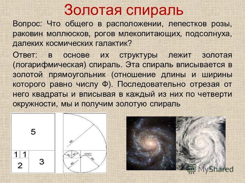 Золотая спираль Вопрос: Что общего в расположении, лепестков розы, раковин моллюсков, рогов млекопитающих, подсолнуха, далеких космических галактик? Ответ: в основе их структуры лежит золотая (логарифмическая) спираль. Эта спираль вписывается в золот