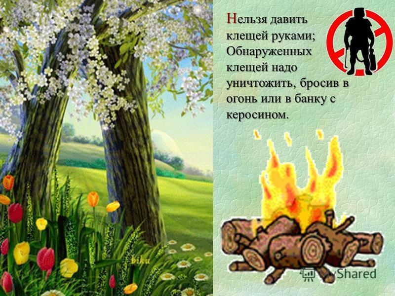 Н ельзя давить клещей руками; Обнаруженных клещей надо уничтожить, бросив в огонь или в банку с керосином.