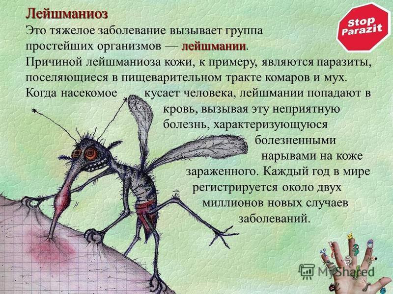 Лейшманиоз Это тяжелое заболевание вызывает группа лейшмании простейших организмов лейшмании. Причиной лейшманиоза кожи, к примеру, являются паразиты, поселяющиеся в пищеварительном тракте комаров и мух. Когда насекомое кусает человека, лейшмании поп