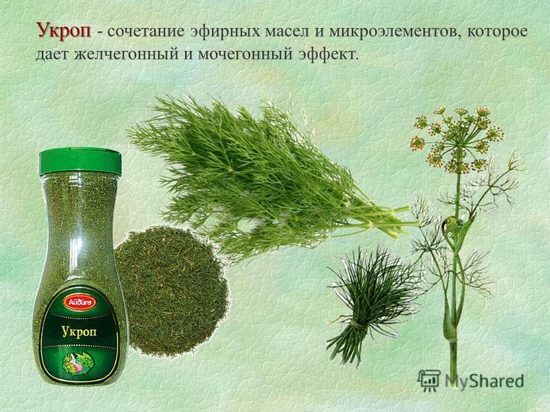 Укроп Укроп - сочетание эфирных масел и микроэлементов, которое дает желчегонный и мочегонный эффект.