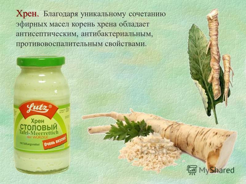 Хрен. Хрен. Благодаря уникальному сочетанию эфирных масел корень хрена обладает антисептическим, антибактериальным, противовоспалительным свойствами.