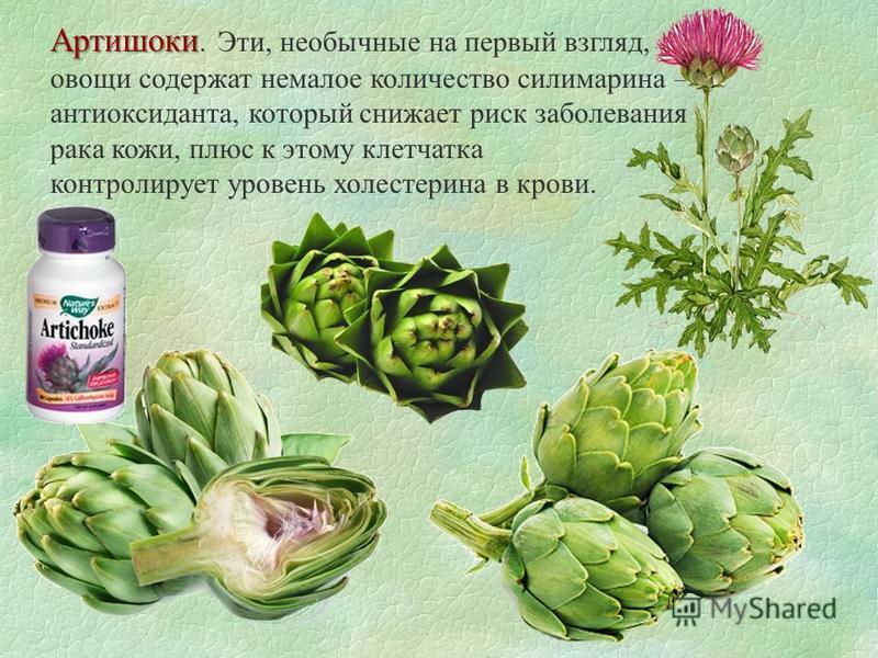 Артишоки Артишоки. Эти, необычные на первый взгляд, овощи содержат немалое количество силимарина – антиоксиданта, который снижает риск заболевания рака кожи, плюс к этому клетчатка контролирует уровень холестерина в крови.