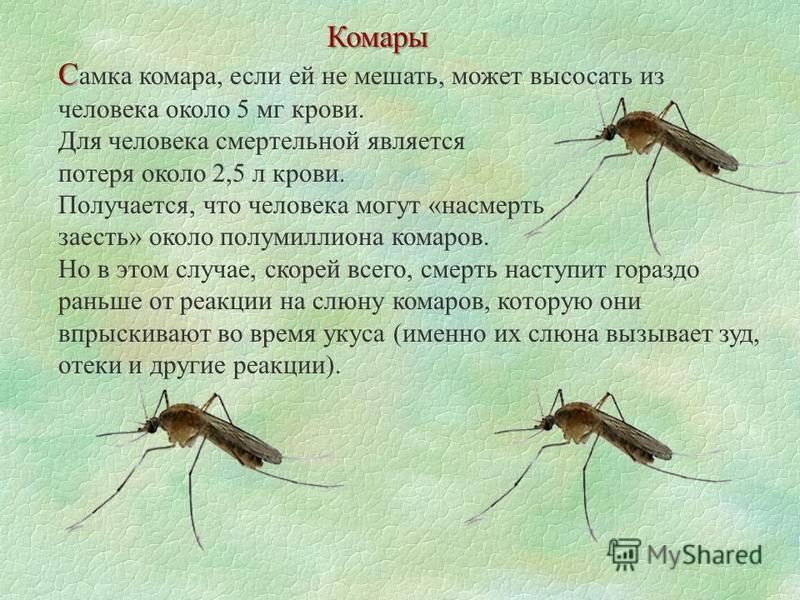 Комары С С амка комара, если ей не мешать, может высосать из человека около 5 мг крови. Для человека смертельной является потеря около 2,5 л крови. Получается, что человека могут «насмерть заесть» около полумиллиона комаров. Но в этом случае, скорей