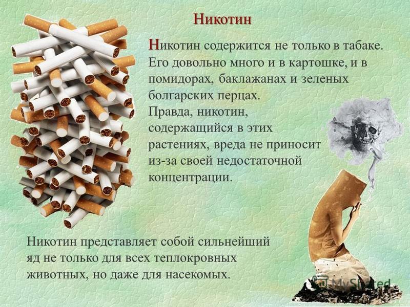 Никотин Н Н икотин содержится не только в табаке. Его довольно много и в картошке, и в помидорах, баклажанах и зеленых болгарских перцах. Правда, никотин, содержащийся в этих растениях, вреда не приносит из-за своей недостаточной концентрации. Никоти