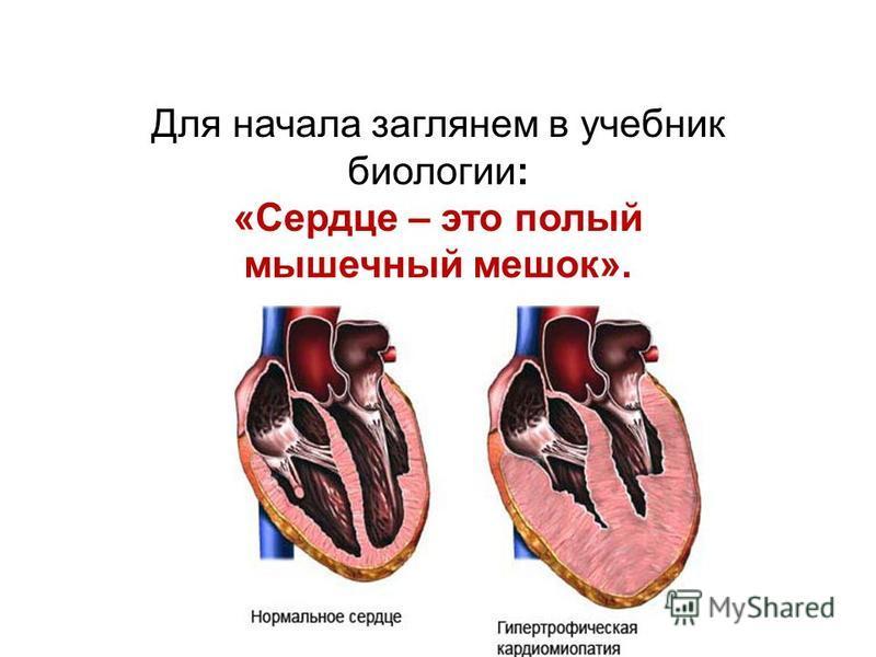 Для начала заглянем в учебник биологии: «Сердце – это полый мышечный мешок».