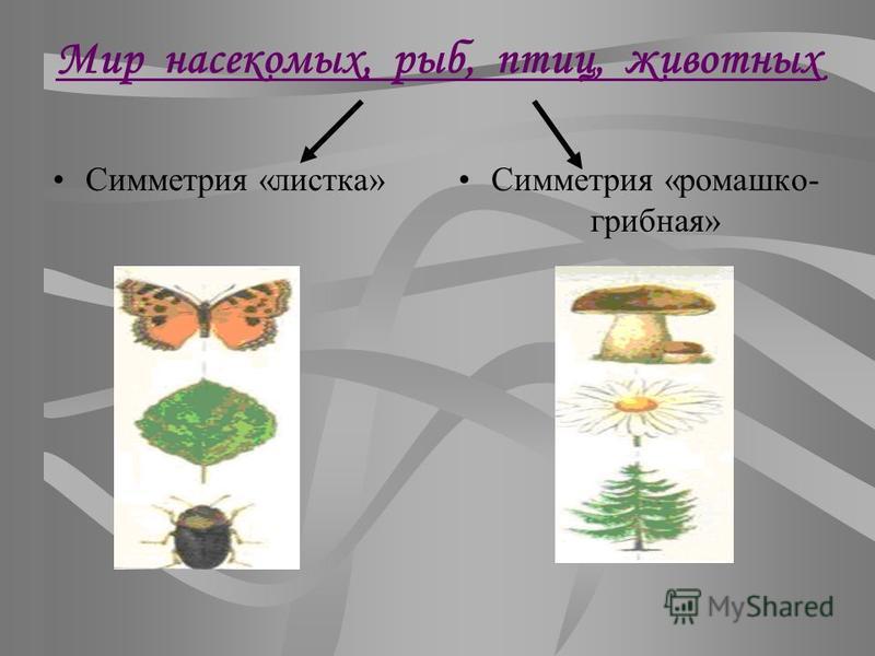 Мир насекомых, рыб, птиц, животных Симметрия «листка»Симметрия «ромашка- грибная»