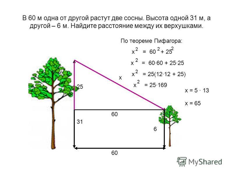 В 60 м одна от другой растут две сосны. Высота одной 31 м, а другой – 6 м. Найдите расстояние между их верхушками. 60 6 31 х 60 25 По теореме Пифагора: х = 60 + 25 2 2 2 х = 5 · 13 х = 60·60 + 25·25 2 х = 25(12·12 + 25) 2 х = 65 х = 25·169 2