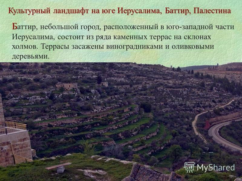 Культурный ландшафт на юге Иерусалима, Баттир, Палестина Б Б аттир, небольшой город, расположенный в юго-западной части Иерусалима, состоит из ряда каменных террас на склонах холмов. Террасы засажены виноградниками и оливковыми деревьями.
