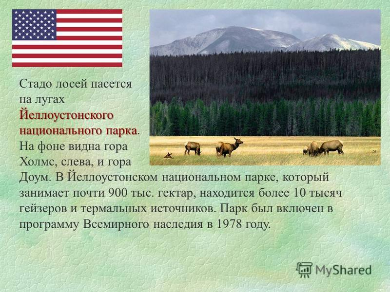 Стадо лосей пасется на лугах Йеллоустонского национального парка национального парка. На фоне видна гора Холмс, слева, и гора Доум. В Йеллоустонском национальном парке, который занимает почти 900 тыс. гектар, находится более 10 тысяч гейзеров и терма