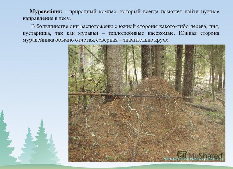 Муравейник - природный компас, который всегда поможет найти нужное направление в лесу. В большинстве они расположены с южной стороны какого-либо дерева, пня, кустарника, так как муравьи – теплолюбивые насекомые. Южная сторона муравейника обычно отлог