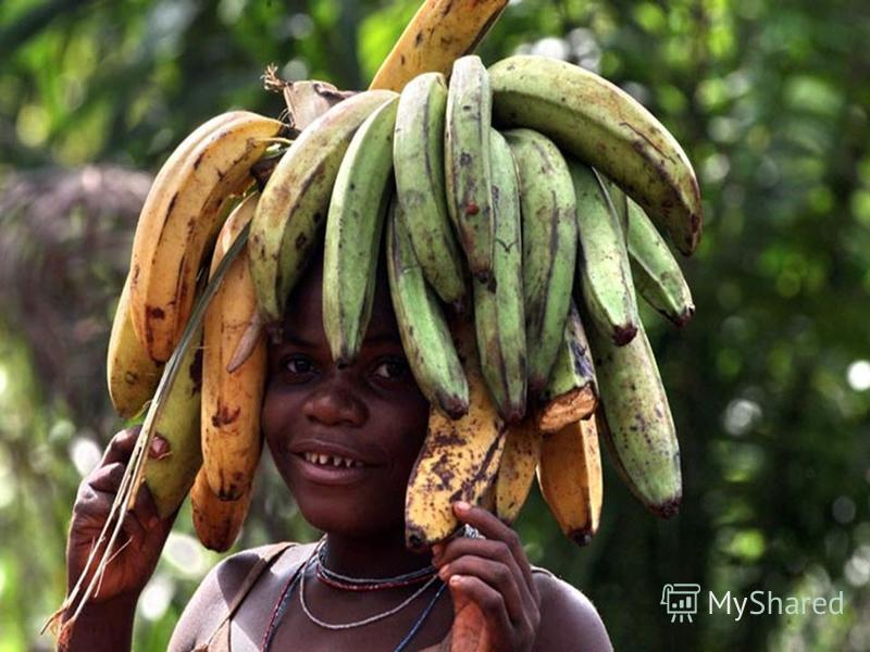 Народы зоны экваториальных лесов - пигмеи - малорослы (ниже 150 см). Цвет кожи у них менее темный, чем у многих других негроидов, губы тонкие, широкий нос, коренастые. Пигмеи - жители лесов. Лес для них - дом и источник всего необходимого для существ