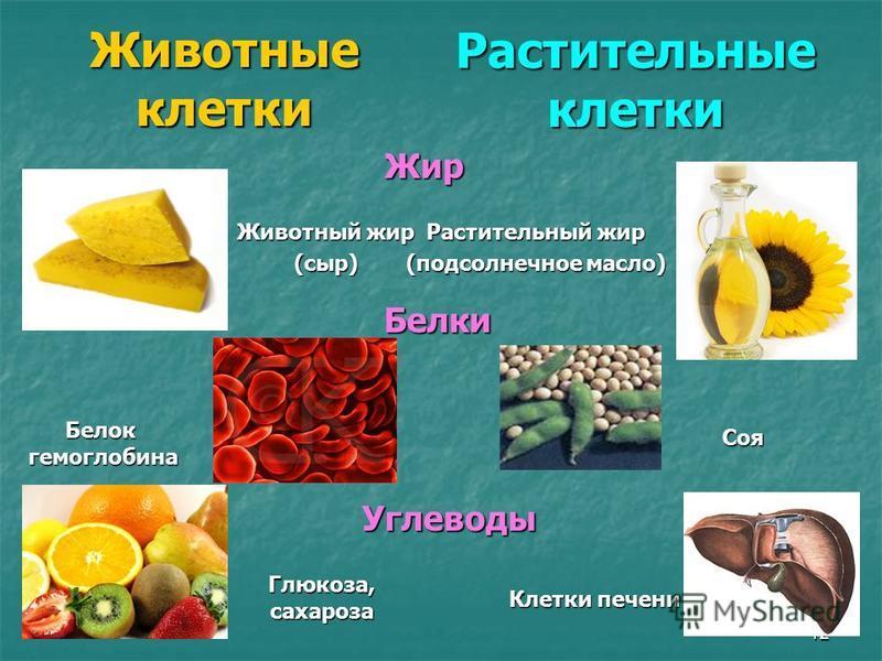 12 Животные клетки Растительныеклетки Жир Растительный жир (подсолнечное масло) Животный жир (сыр) Белки Белокгемоглобина Соя Углеводы Глюкоза,сахароза Клетки печени
