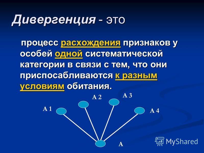 Дивергенция - это процесс расхождения признаков у особей одной систематической категории в связи с тем, что они приспосабливаются к разным условиям обитания. А А 1 А 4 А 3 А 2
