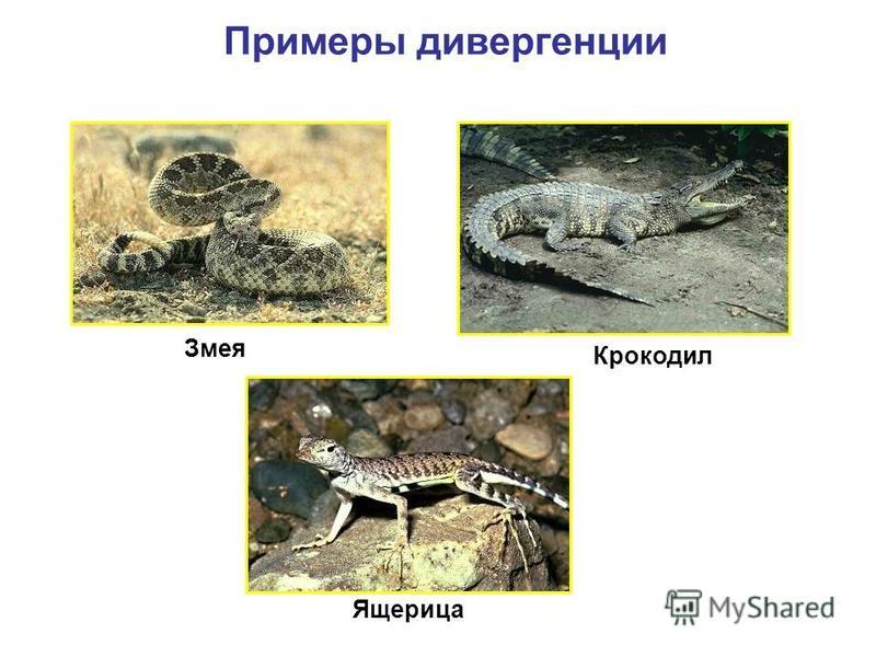 Змея Крокодил Ящерица