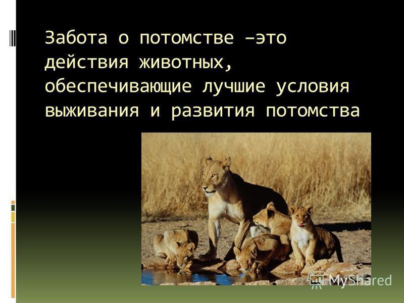 Забота о потомстве –это действия животных, обеспечивающие лучшие условия выживания и развития потомства
