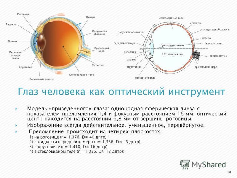 Модель «приведённого» глаза: однородная сферическая линза с показателем преломления 1,4 и фокусным расстоянием 16 мм; оптический центр находится на расстоянии 6,8 мм от вершины роговицы. Изображение всегда действительное, уменьшенное, перевёрнутое. П