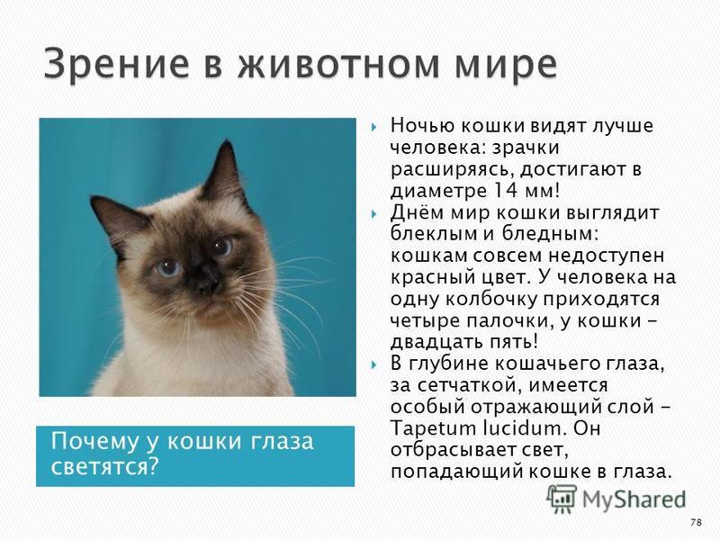 Почему у кошки глаза светятся? Ночью кошки видят лучше человека: зрачки расширяясь, достигают в диаметре 14 мм! Днём мир кошки выглядит блеклым и бледным: кошкам совсем недоступен красный цвет. У человека на одну колбочку приходятся четыре палочки, у