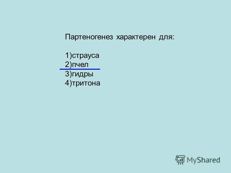Партеногенез характерен для: 1)страуса 2)пчел 3)гидры 4)тритона