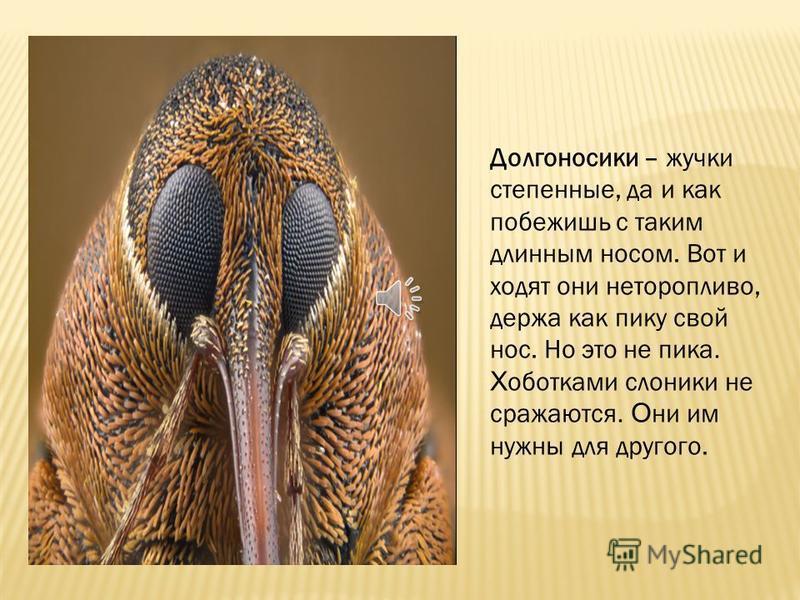 Долгоносиками они называются, потому что у них долгий, длинный нос. А слониками, потому что у них есть хоботок. Хоботок или нос - это вытянутая голова.