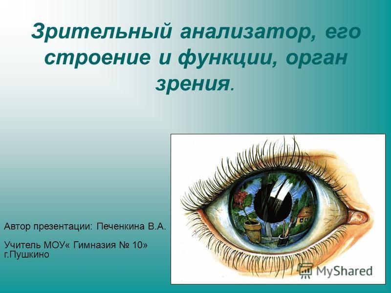 Зрительный анализатор, его строение и функции, орган зрения. Автор презентации: Печенкина В.А. Учитель МОУ« Гимназия 10» г.Пушкино