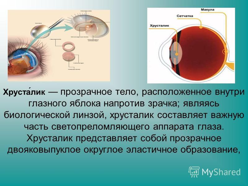Хруста́лик прозрачное тело, расположенное внутри глазного яблока напротив зрачка; являясь биологической линзой, хрусталик составляет важную часть светопреломляющего аппарата глаза. Хрусталик представляет собой прозрачное двояковыпуклое округлое эласт