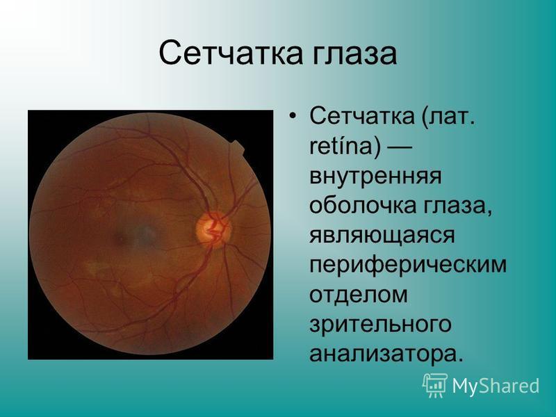 Сетчатка глаза Сетчатка (лат. retína) внутренняя оболочка глаза, являющаяся периферическим отделом зрительного анализатора.